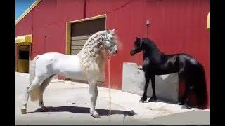 Лошади, пони, щенки, дети и свинки - играют, веселятся или злятся и делают, как им вздумается