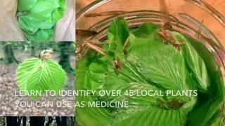 Download Lagu Study Herbal Medicine Gratis STAFABAND
