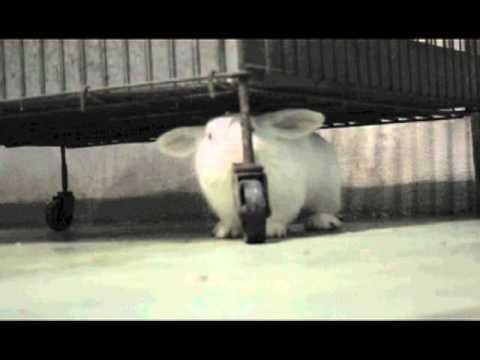 Prima libera uscita di Lars – Centro di recupero per animali da laboratorio, Parco di Monza