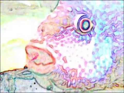 D.K.P. =Fish Basil=