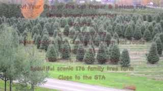 [Cut Your Own Christmas Tree Hamilton, Mississauga, Oakville,...] Video