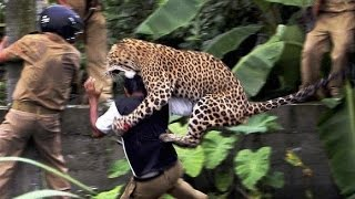 Top 10 When Animal Attack Video Compilation 2014