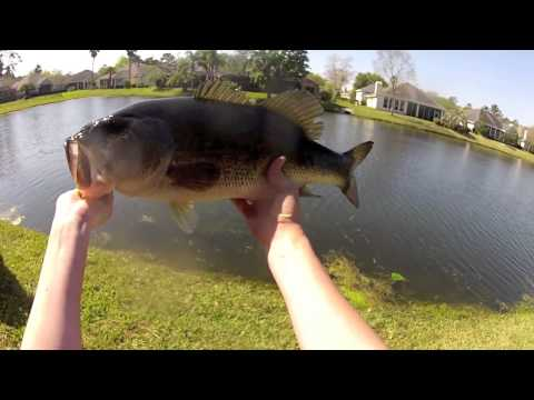 Spring Break Bass Fishing: Bed Fishing and Grass Fishing
