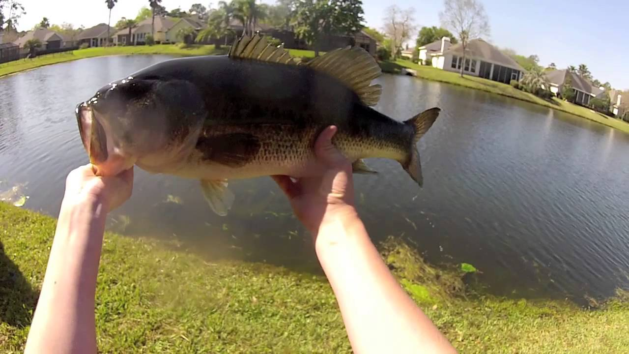 Spring break bass fishing bed fishing and grass fishing for Bed fishing for bass