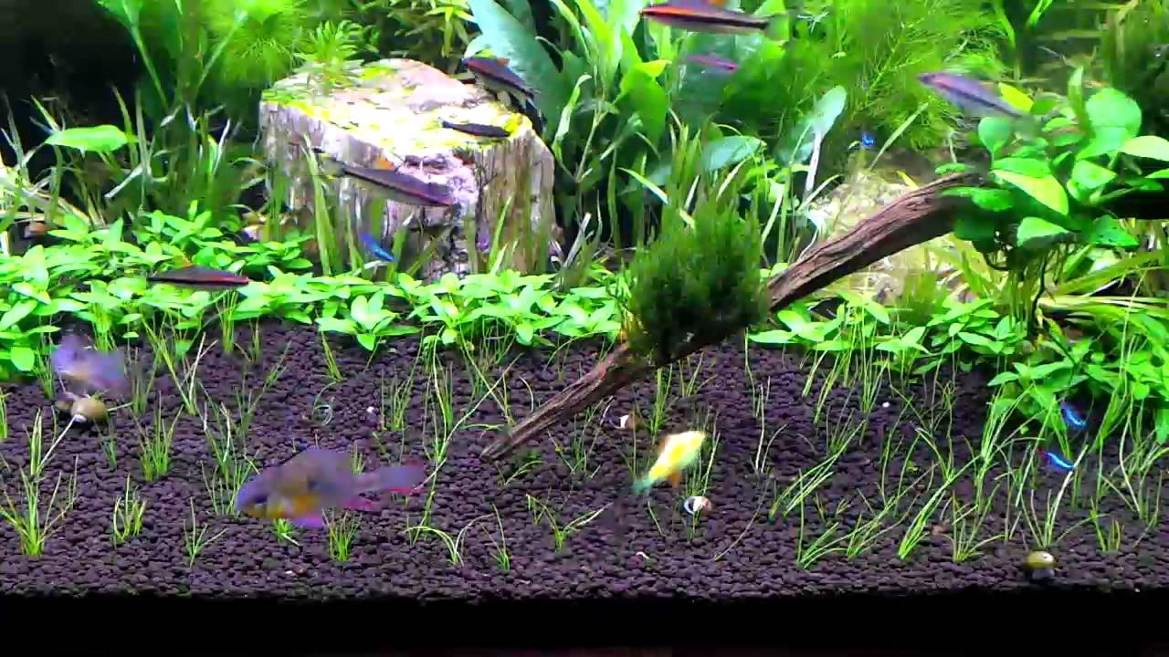 HOW TO: Dwarf Hair Grass Carpet Day 1 - YouTube