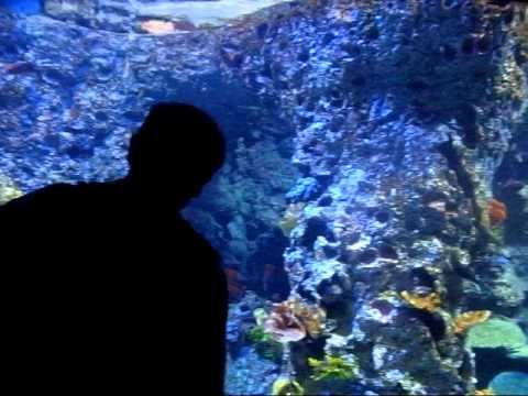 World's Largest Aquarium @ Marine Life Park
