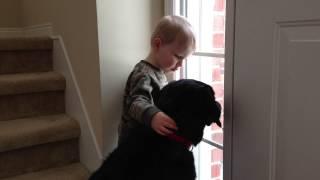 O Cachorro Sente Falta Da Sua Fam�lia, O Modo Como O Menino O Consola � Muito Fofo!