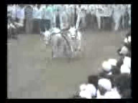 bailgada sharyat Sripati balaji pokharkar yanchi  nad khula...