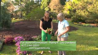 Central Florida Gardening - Flower Trials At Leu Gardens