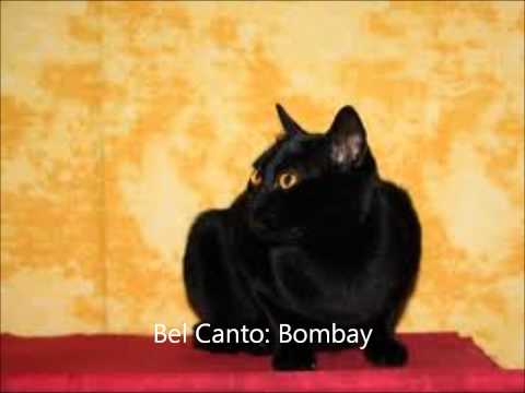 Bel Canto - Bombay