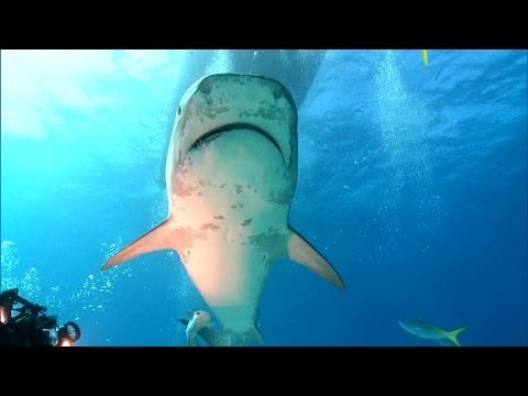 How to Protect Yourself When Sharks Attack
