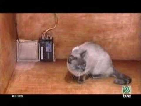 Mecanica cuantica: el gato de Schrodinger