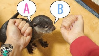 ???? ?????????????????????(Otter Bingo, guess where is your snack hiding!)