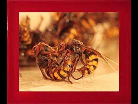 Veleno per vespe e calabroni