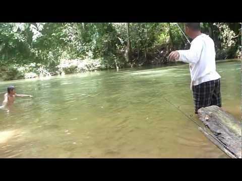 ikan semah ulih nginti ba sungai lemanak ( pancing ikan kelah )