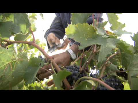 La agricultura de CLM, fuerte en el exterior