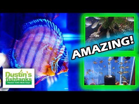 AQUARIUM FISH ROOM TOUR: Dean's Amazing WILD CAUGHT Fish Room Part 2