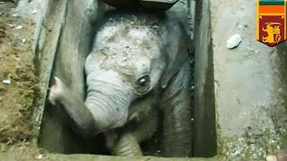 Animal rescue video: Baby elephant falls down Sri Lanka storm drain and breaks its leg - TomoNews