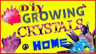 Growing Crystals | Crystal growing kit | DIY Crystal | Kid's science kit