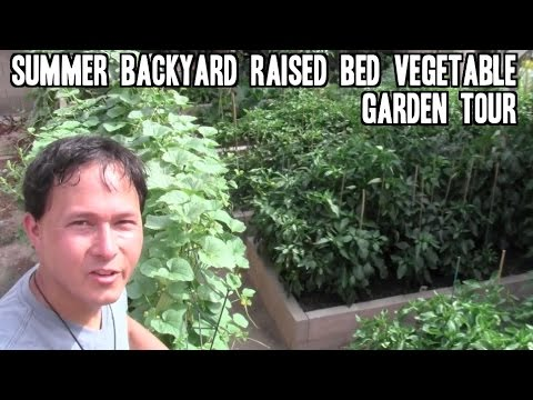 Summer Backyard Raised Bed Vegetable Garden Tour
