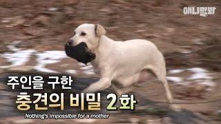 """엄마라는 이름으로ㅣ""""Nothing is impossible for a mother"""" The secret behind the dog that saved the owner EP2"""