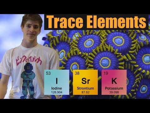 Minor Trace Elements Explained: Iodide, Strontium, Potassium