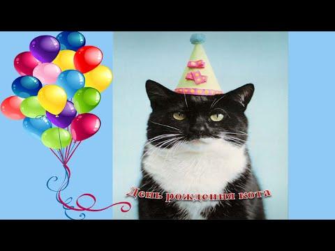 Смешные поздравления от котов 423