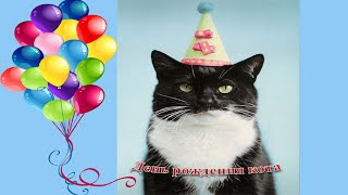 Открытки ко дню рождения с котами
