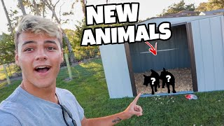 BUYING 2 MINI GOATS for My FARM!!