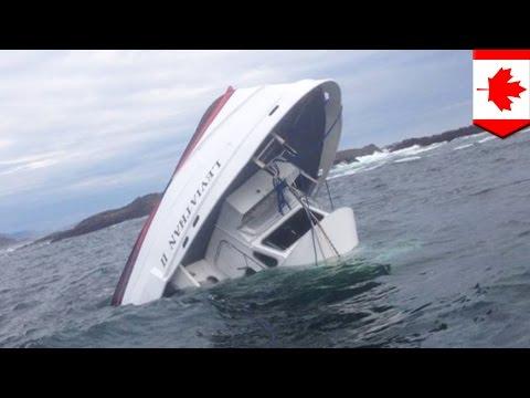 Naufrage au Canada : un bateau d'observation des baleines coule, tuant quatre personnes