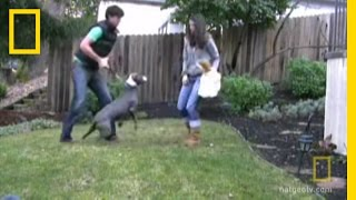 Training an Aggressive Dog   National Geographic
