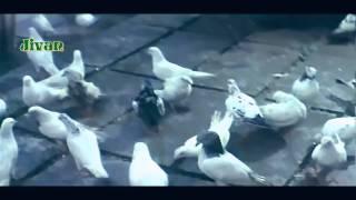 Aashiqui Mein Har Aashiq - Dil Ka Kya Kasoor (1992) Special Editing