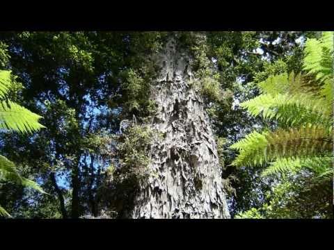 Whirinaki Forest Park - near Rotorua, New Zealand