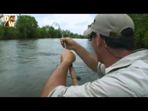 Pez tigre pesca