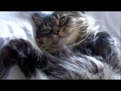 Marlon the cat - Lazy Afternoon