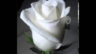 Cultivo una rosa blanca - José Martí