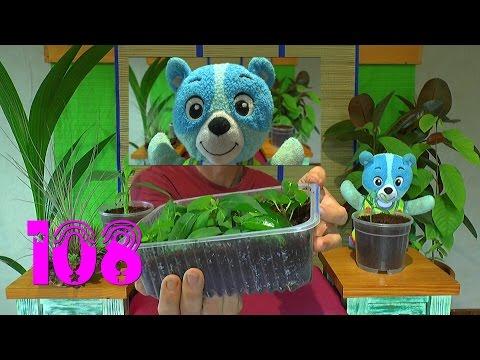 Pflanzen Spaß. Die Sämlinge und wie geht es weiter mit den Exoten und anderen Pflanzen Teil 108