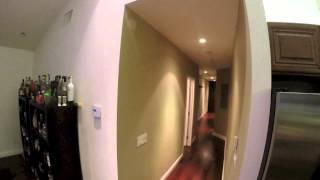 Vida gatuna: la dueña le pone una GoPro al gato para ver la vida con otros ojos