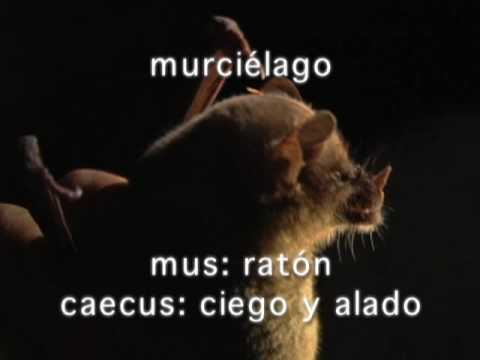 Murcielagos