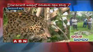 Five Cheetah lost life within 6 months at Nizamabad district
