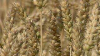 Japan Bans U.S. Wheat Imports, and More   5/31/13