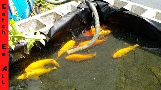 HOW SMART are FISH?