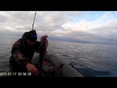 ура губа рыбалка сегодня