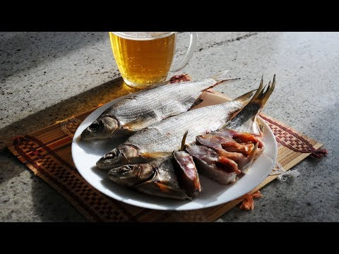 Рыбец Вяленый Засолка Рыбы в Жару. Выпуск №303