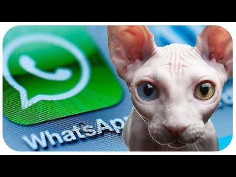 Über üble Whatsapp-Abzocke - digitale Kinder - Rosetta die Raumsonde