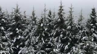 8 HOURS of SNOW Falling, Gentle Winter Snowfall, Snowing in Forest for Relaxing, Sleeping, Studying