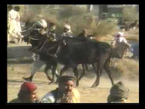 Maila Paharpur D.I.Khan(p1)