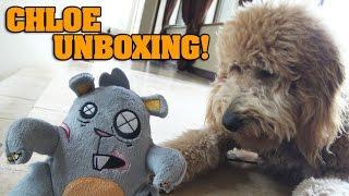 Halloween BARKBOX with CHLOE!