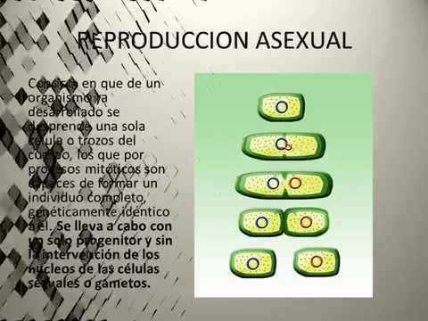REPRODUCCION ASEXUAL EN ANIMALES