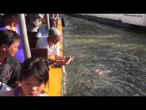 Members Feeding the fishes at Bangkok's  Chao Praya River